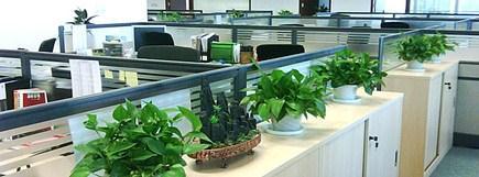 办公室植物租赁公司