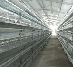 鲁兴农牧养鸡自动化设备鸡笼养设备自动化鸭笼设备