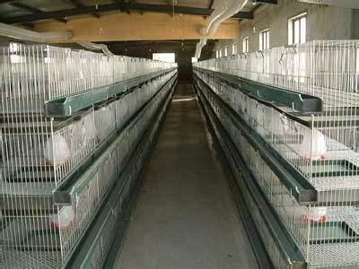 山东鲁兴专业养鸭设备鸭笼设备肉鸭鸭笼