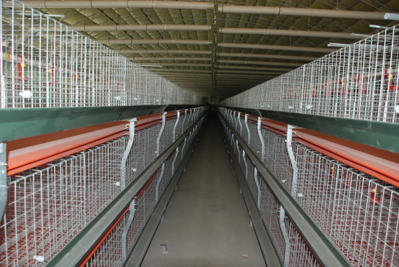 秋冬季养鸡要防低温病欣鲁兴肉鸡笼代理商