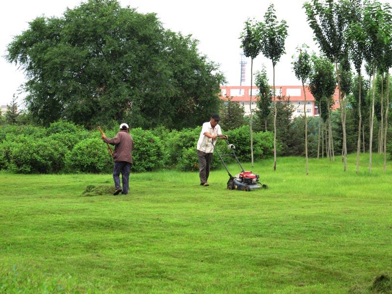 承接佛山园林绿化工程、花草树木种植、时花布置等