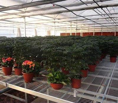 幼苗种植苗床网大棚花架网