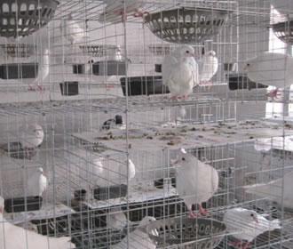 养殖场镀锌3-12型鸽笼