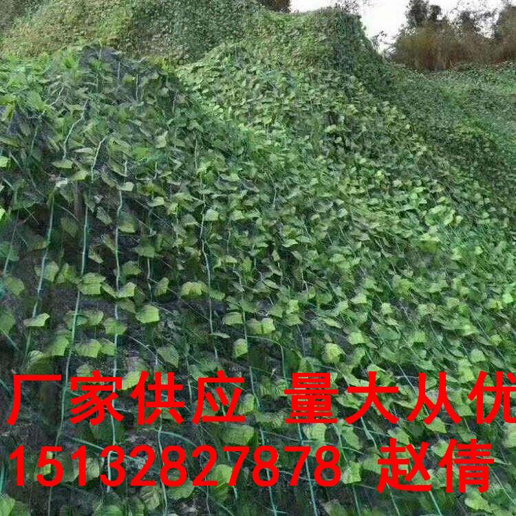 22公分植物攀巖網爬藤網荒山綠化種植帶鋼絲植物攀爬